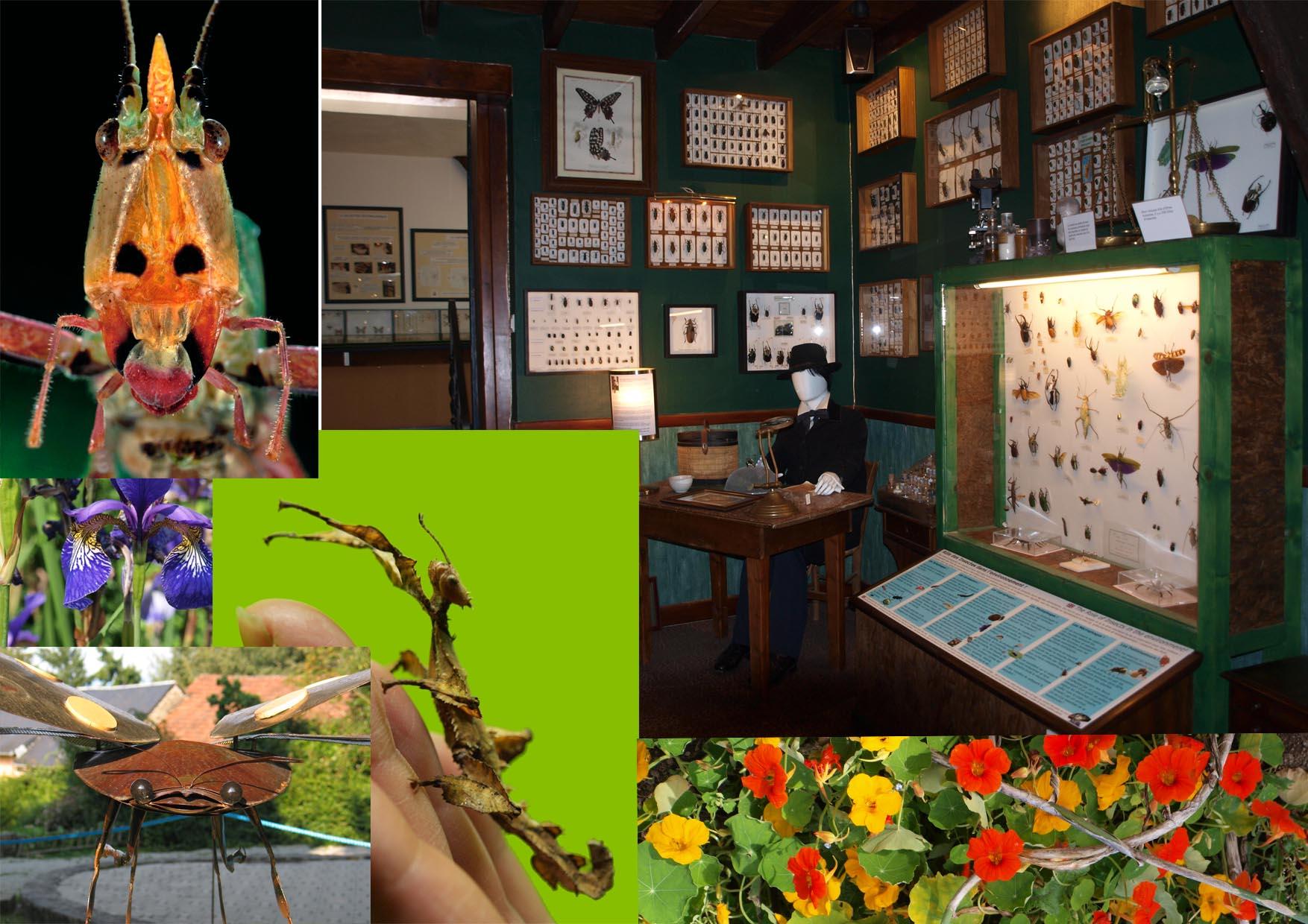 Cité des Insectes : Musée & Parc nature