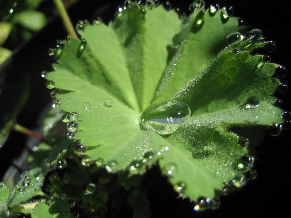 Sortie Botanique découverte des plantes du Limousin - FIRBEIX