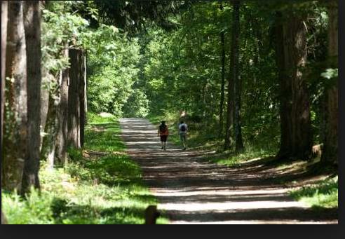 Limoges : Course nature des Vaseix