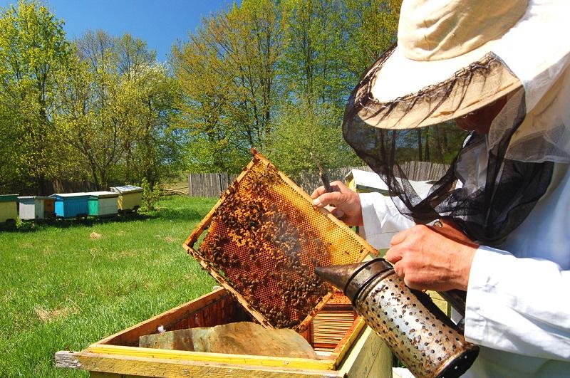 Rencontre avec un apiculteur - SAINT-SULPICE-LES-FEUILLES