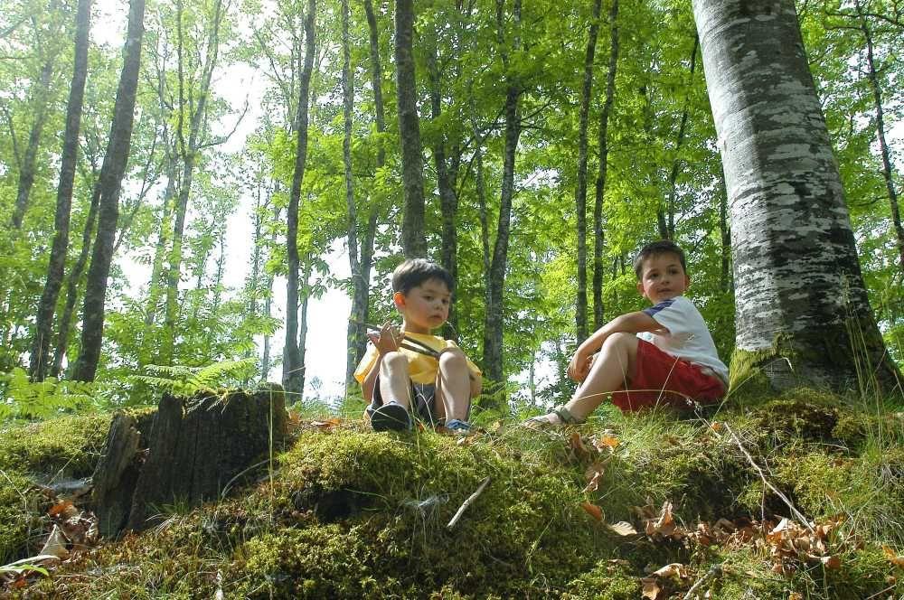 A l'école de la forêt